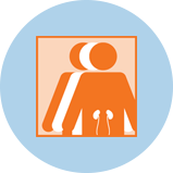 An icon for kidney cancer showing 3 figures. The orange figure in front has an outline of the kidneys.